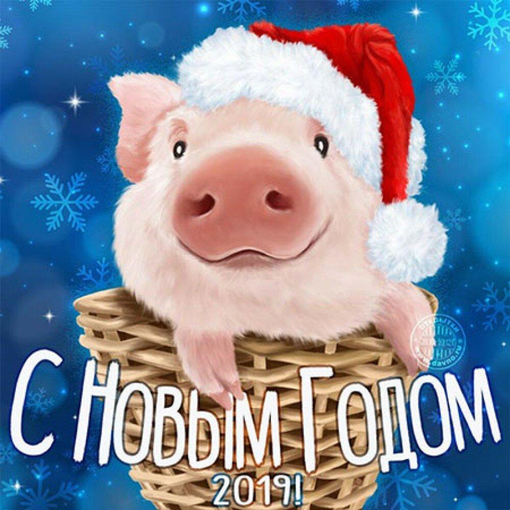Тосты и поздравления с годом свиньи — 100 лучших вариантов новогодних пожеланий!
